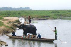 Chitwan National Park, Nepal, Photo by Jean-François Pernette, 2008.