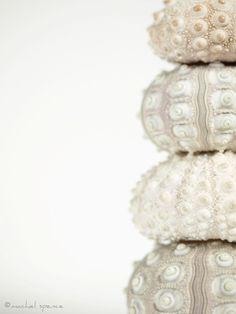 ♥ Color Malibu #Blanco #White www.facebook.com/malibuespana Ron de coco Malibu