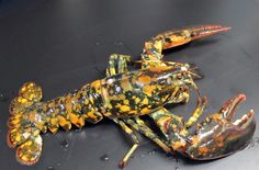 "Calico Lobster -- ""This photo provided by the New England Aquarium in Boston shows a rare calico lobster that could be a 1-in-30 million, according to experts. It was caught off Winterport, Maine, and was discovered by Jasper White's Summer Shack and is being held at the New England Aquarium for the Biomes Marine Biology Center, a science center in Rhode Island.""  From MSNBC's PhotoBlog, via The Soul is Bone.  Photo credit: Tony Lacasse / New England Aquarium via AP."