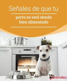 Señales de que tu perro no está siendo bien alimentado - Mis animales  A la hora de darle de comer a tu mascota debes prestar atención a las distintas señales que indican que un perro no está siendo bien alimentado.