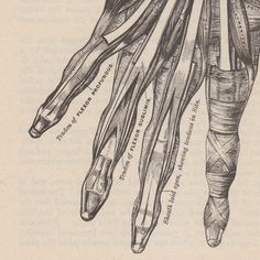 """1978 edition of Gray's Anatomy  A technical drawing incorporating actual lines and shading to describe the anatomy of the hand. The framing of the subject is pleasing, making use of the """"Golden Traingle.""""   I think that even though the drawing is technical in nature, it exudes feeling in the form of the wonderment of the human form."""