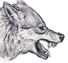 Wolf drawings, animal sketches, animal drawings, drawing tips, drawing refe Animal Sketches, Art Drawings Sketches, Animal Drawings, Cool Drawings, Drawings Of Wolves, Sketch Drawing, Drawing Animals, Drawings Of Dogs, Profile Drawing