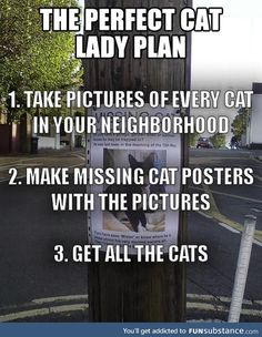 Perfect cat lady plan