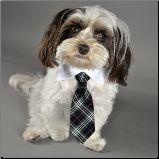 Black Plaid Dog Necktie - Gaah!  How adorable!