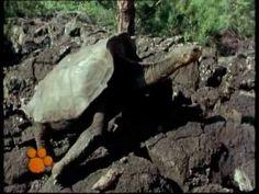 Χελώνες- Ο μαγικός κόσμος των ζώων Winter Activities For Kids, Animals, Teaching, Animales, Animaux, Animal, Education, Animais, Onderwijs