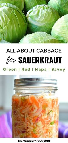 The ultimate guide to the best cabbage for fermentation: Green, Red or Purple, Savoy, or Napa. Learn how to choose, buy, and store cabbage for mouthwatering and probiotic-rich sauerkraut. Red Cabbage Sauerkraut, Making Sauerkraut, Homemade Sauerkraut, Fermented Cabbage, Sauerkraut Recipes, Fermented Foods, Types Of Cabbage, Nutrients In Cabbage