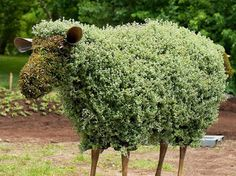 """mosaiculture """"is a refined horticultural art that involves creating and mounting living artworks made primarily from plants with colourful f..."""