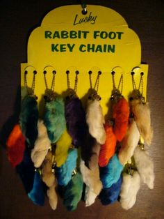 Rabbit feet... Absolutely no idea why we thought these were supposed to be good luck??!
