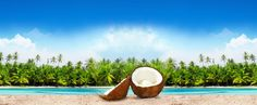 Our bulk organic coconut products has no additives or preservatives, fresh and pure as nature intended. Contact us to buy bulk organic coconut sugar, Bulk organic coconut flour, Bulk organic coconut flakes and organic coconut oil Organic Coconut Oil, Coconut Sugar, Coconut Flour, Coconut Palm Tree, Coconut Products, Pure Products, Coconut Flakes, Healthy Fats, Palm Trees