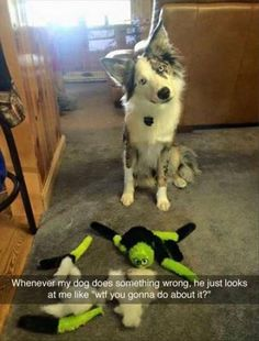 Whenever my dog does something wrong (Funny Animal Pictures) - #dog #look #wrong #wtf