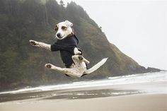 Image: A jumping Jack Russell terrier on the Oregon Coast's Hobbit Beach. (© Heather Leigh West/Getty Images)