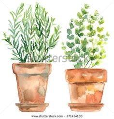 watercolor sketch of terra cotta pot - Google Search More