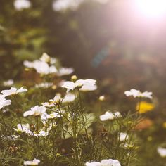 Summer Blooms 1 by Trina Baker Photography, via Flickr