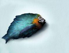 macaw-fish divinopolis