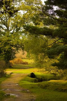 The New Forest, UK. I really want to visit the New Forest. It looks enchanting. -CS