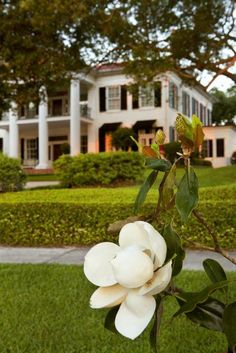simply southern - mansions and magnolias