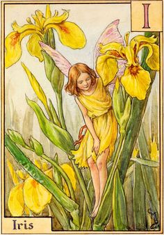 I am Iris: I'm the daughter Of the marshland and the water. Looking down, I see the gleam Of the clear and peaceful stream; Water-lilies large and fair With their leaves are floating there; All the water-world I see, And my own face smiles at me!