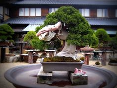 Image from http://www.bonsaiempire.com/images/top10/oldest/oldest-juniper-bonsai.JPG.