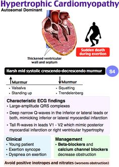 Hypertrophic Cardiomyopathy Asymmetric LV septal wall hypertrophy → outflow obstruction Autosomal dominant (familial form) Young patient Exertional syncope Sudden cardiac death gallop Midsystolic murmur (↑ as preload ↓) Rx: ßBs or CCBs Nursing Apps, Cardiac Nursing, Nursing Notes, Medicine Notes, Emergency Medicine, Cardiac Sonography, Hypertrophic Cardiomyopathy, Family Nurse Practitioner, Critical Care Nursing