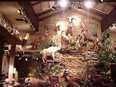 VenaticFanatics Top 10 Trophy Rooms You are in the right place about basement Hunting Room Here we o