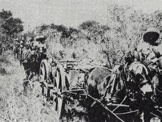 South African 13-pounder gun battery treks through the East African bush. 1916
