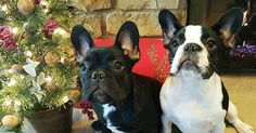 5 Dog Breeds That Are Good with Holiday Guests