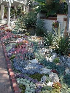 A cactus garden is easy to maintain, and a popular choice if you live in an arid climate. Here are some good advice and tips to create a nice cactus garden. Succulent Landscaping, Succulent Gardening, Cacti And Succulents, Front Yard Landscaping, Planting Succulents, Planting Flowers, Landscaping Ideas, Succulent Garden Ideas, Desert Gardening