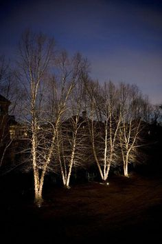 Beautiful landscape lighting example of these mature river birch's by Outdoor Advantage