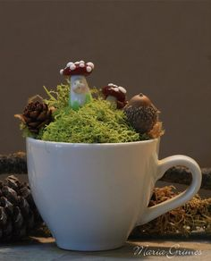 Fairy Gardens can be created in different and interesting containers!  We love this tiny garden in a coffee cup!  So cute!