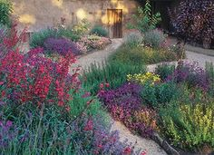 9 Plants That'll Make Your Southern California Garden Flourish | Home | PureWow Los Angeles