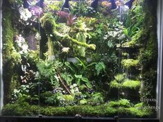 Miniscaping: Cameleon Paludarium heaven by 诚 王