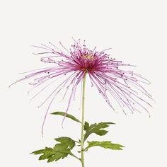#FlowerShop Flowers   The Flower Book