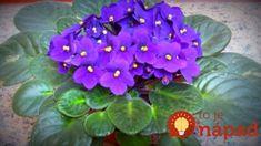Nápady a Tipy Organic Gardening, Gardening Tips, Feng Shui, Beautiful Gardens, Pesto, Hacks, Canning, Flowers, Plant