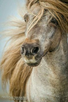 Horses - Beauty beneath your skin All The Pretty Horses, Beautiful Horses, Animals Beautiful, Simply Beautiful, Beautiful Images, Horse Photos, Horse Pictures, Animals And Pets, Cute Animals