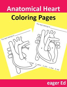 H is for Heart (Anatomical) | Free Valentine's Day coloring pages with a little humor | eager Ed