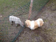 De schaapjes in de buurt bezochten we vaak. Vond ik wel leuk!!!