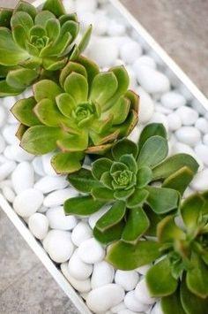 Eccovi un'idea semplice ed originale per il centrotavola. Per realizzare questo terrario vi serviranno delle piantine grasse, a vostra scelta, un contenitore basso e dei sassi. Componete il tutto c...