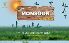 Monsoon, 30th, Tourism, Packaging, Turismo, Wrapping, Travel, Traveling