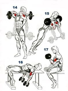 Dumbbell Bicep Workout, Bicep Workout Women, Big Biceps Workout, Back And Bicep Workout, Weight Training Workouts, Gym Workout Tips, Boxing Workout, Workout Posters, Bodybuilding Workouts