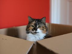 "What's Up With That: Why Do Cats Love Boxes So Much? | Cally in a box.      | Credit: <a href=""https://flic.kr/p/dyWe1V"">Helen Haden/flickr</a> 