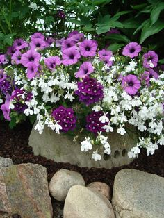 lovely potting - purple and white flowers
