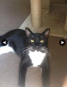 NAME Loki DESCRIPTION Male Neutered Black with white paws belly and chin DATE LAST SEEN May-15-2016 AREA LAST SEEN Ridgefield Park, NJ 07660 ADDRESS LAST SEEN 15 Garden Street, Ridgefield Park, NJ, United States PHONE (201) 449-9681 Male  Neutered  Black with white paws belly and chin