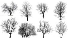 winter tree silhouette - Google zoeken