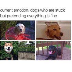 We don't deserve dogs #dogsfunnymeme