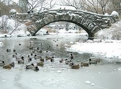 17 best catcher in the rye holden images on pinterest catcher in the bowery boys new york city history january 2010 an image of the duck pond mentioned in catcher in the rye posted just after the death of j publicscrutiny Gallery