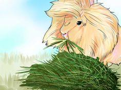 How to Care for Lionhead Rabbits -- via wikiHow.com