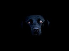 Google Image Result for http://ezwebrus.com/wallpapers/animal/dog_blackness.jpg