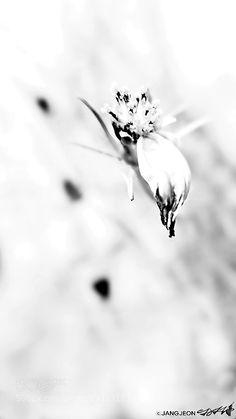 last petal by JANGJEON. @go4fotos