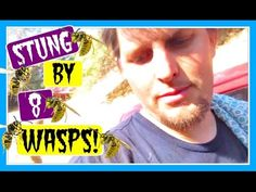 STUNG BY 8 WASPS AT ONCE! (DAY 650)
