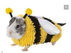 PetSmart Just Revealed an Unbelievably Adorable Line of Guinea Pig Halloween Costumes Guinea Pig Costumes, Animal Costumes, Pet Costumes, Costume Ideas, Pig Halloween Costume, Pet Guinea Pigs, Pet Toys, Cute Animals, Reptile Cage